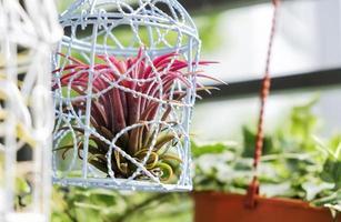 Tillandsia en décoration de cage à oiseaux dans le petit jardin au balcon photo
