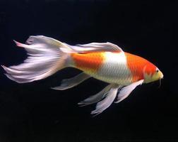 beau poisson dans un aquarium photo