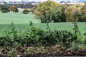 les champs verts photo