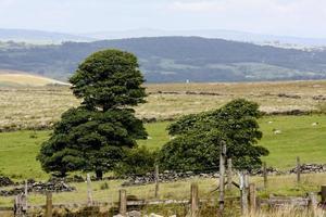 les landes de lancashire photo
