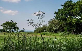 une prairie anglaise photo