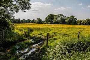pré jaune et clôture photo