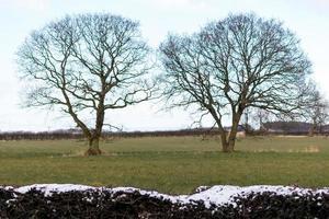 deux arbres dans un champ photo