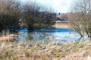 un étang gelé photo