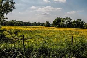 une prairie jaune photo