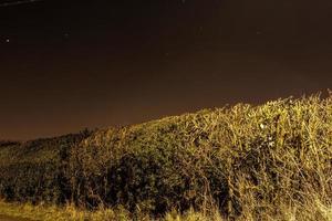 la haie la nuit photo