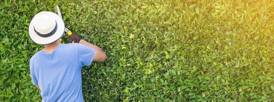 homme travaillant dans le jardin élagage des arbres d'ornement à la maison le matin photo
