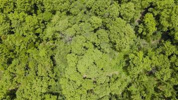 vue aérienne de la belle forêt tropicale photo