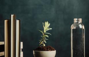 une photo minimaliste d'une plante poussant dans un pot avec de l'eau et des livres