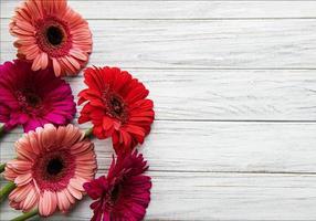 Fleurs de gerbera lumineuses sur fond de bois blanc photo