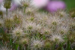 fleurs de la forêt de printemps en fleurs photo