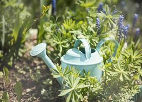 arrosoir vert dans le jardin entre les fleurs photo