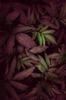 feuilles de plantes vertes et rouges photo
