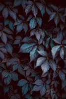 plante bleue laisse dans la nature photo