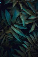 feuilles de plantes vertes au printemps photo