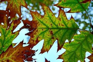 feuilles d'arbres verts au printemps photo