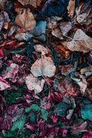 feuilles sèches brunes au sol en saison d'automne photo