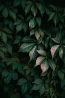 plante verte laisse fond texturé photo