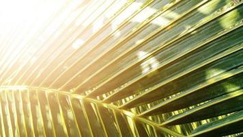 fond de texture de feuille de noix de coco vert tropical ton sombre avec le lever du soleil photo
