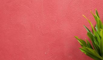 fond de texture de mur rustique en stuc rose photo