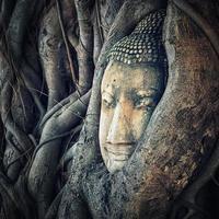 tête de bouddha à ayutthaya photo