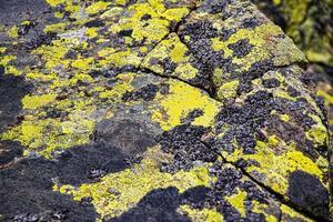 rocher avec de la mousse photo