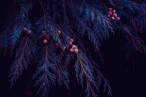 feuilles de pin bleu en saison hivernale photo