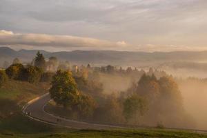 brouillard sur une route et une forêt photo