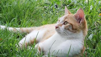 petit chat tranquille photo
