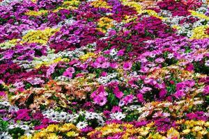 fond de fleurs multicolores photo