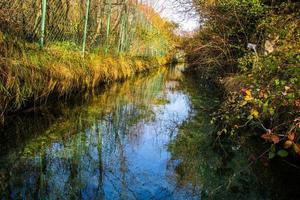 l'eau à travers les arbres et l'herbe photo