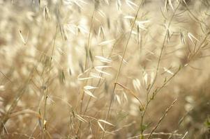 beau fond d'herbe apaisante avec des tiges sèches photo