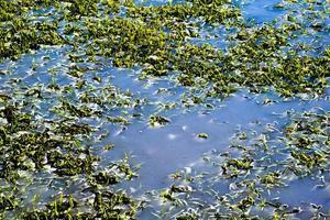 végétation dans l'eau photo