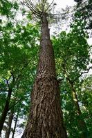 tronc d'arbre dans la forêt photo