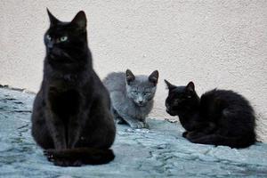 beau portrait de chat errant photo