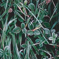 herbe verte givrée en hiver photo