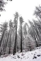 neige dans la forêt en hiver photo