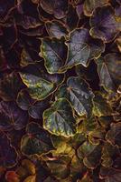 fond texturé de feuilles multicolores photo