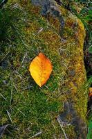 feuilles sèches au sol en automne photo