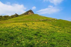 fleurs jaunes sur la montagne photo