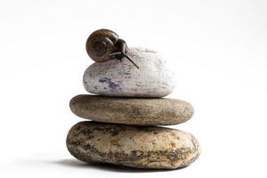 Escargot de vigne sur pile de pierres spa contre fond blanc photo