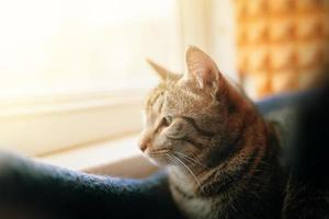chat tigré regarde dans la fenêtre. photo