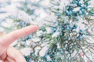 le doigt de la femme atteint les baies. photo