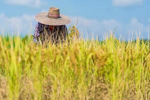agriculteur asiatique travaillant dans la rizière sous ciel bleu photo
