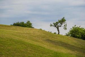 arbre sur une colline photo