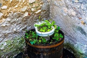 herbes en pots photo
