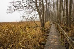 promenade près d'un lac inondé et d'un paysage boisé à la fin de l'automne photo