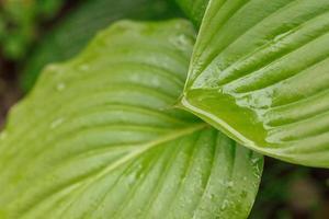 végétation sauvage feuilles vertes dans la forêt photo