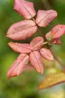 végétation sauvage jours de pluie photo