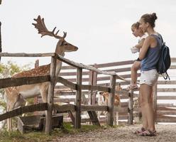 jeune famille passant du temps de qualité ensemble chevreuil se nourrissant dans le parc sauvage photo